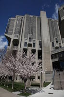 Cherry trees outside of Robarts Library