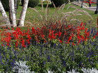Flower bed on campus