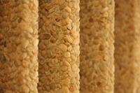 Columns at OISE