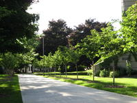 Nature on Campus