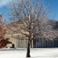 Erindale College, North Building, tree in winter
