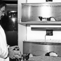 UTM, professor conducting experiment with hamsters