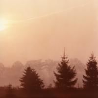 UTM, trees at dusk