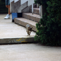 UTM, cat exploring campus
