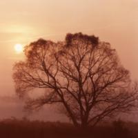 UTM, tree at dusk