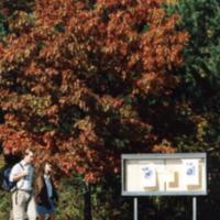 UTM, students walk along a path