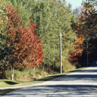 UTM, pathway, autumn scene