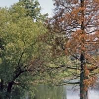 UTM, trees near pond, spring scene