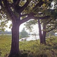 UTM, trees near pond