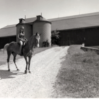 Stables and Horse Riding in the Highland Creek Valley